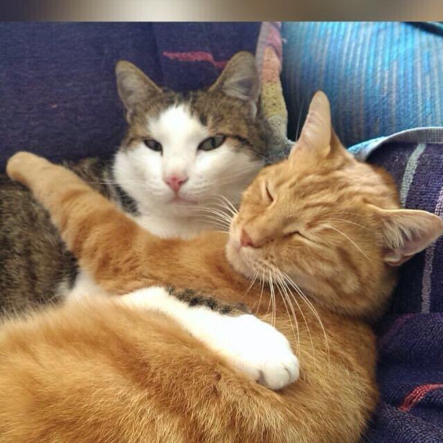Kittens Te Koop Wees Op Uw Hoede Voor Online Verkoop Belgpaag